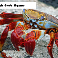 Beach Crab Jigsaw