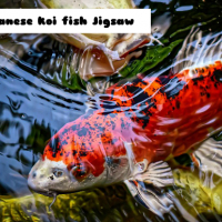 Japanese Koi Fish Jigsaw